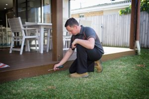 pest control newmarket - termite inspection and management - ants birds cockroaches pest removal in newmarket