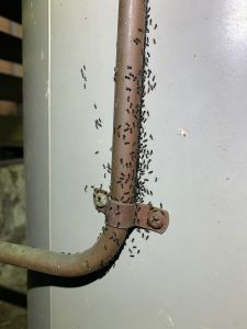 Pre-Purchase-Termite-Inspection-Pest-Control-Newmarket-QLD
