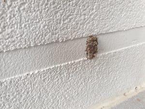 Minor mudding on exterior wall image