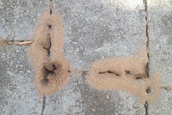 Ants digging dirt under pavers image