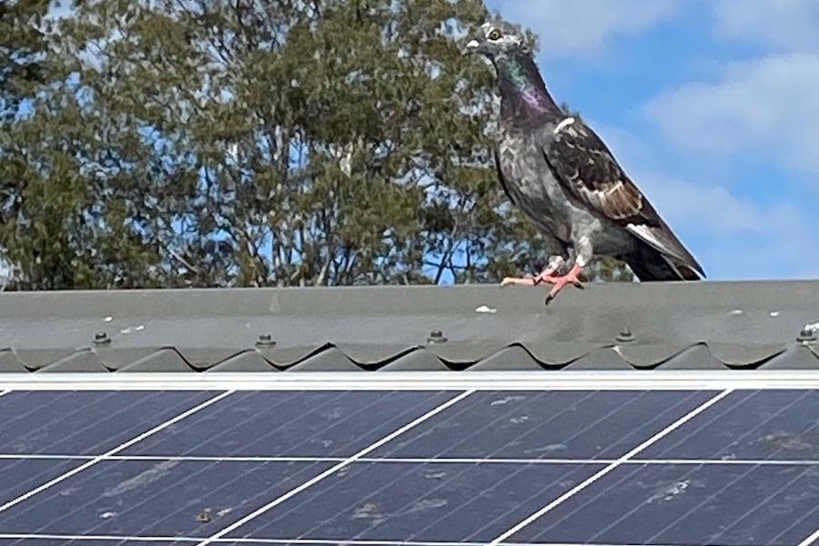 Bird on solar panel image